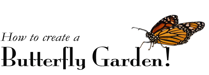 How to Create a Butterfly Garden!