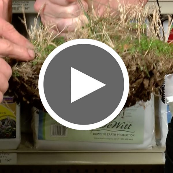 Thumbnail for video of Treating with Preemerge - The Good Earth Garden Center