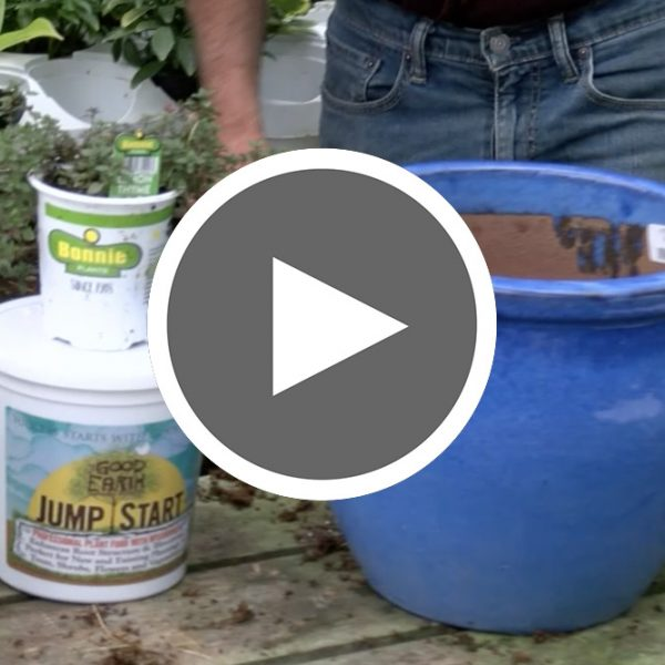 Herb Containers Gardening